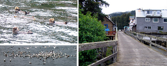 "The Historic Boardwalk in Seldovia, ""I'm Otter Here"" and Swarms of Seabirds Watched Us Go By"