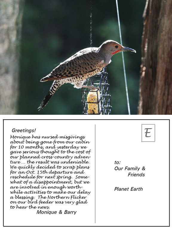 Northern Flicker Postcard - 5813