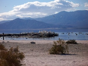 Signs of abundant life are still visible at the Salton Sea, but it's not a place we plan to visit again until drastic measures are taken to remove the stench of dead fish.   -- Photo courtesy California Dept. of Parks & Recreation