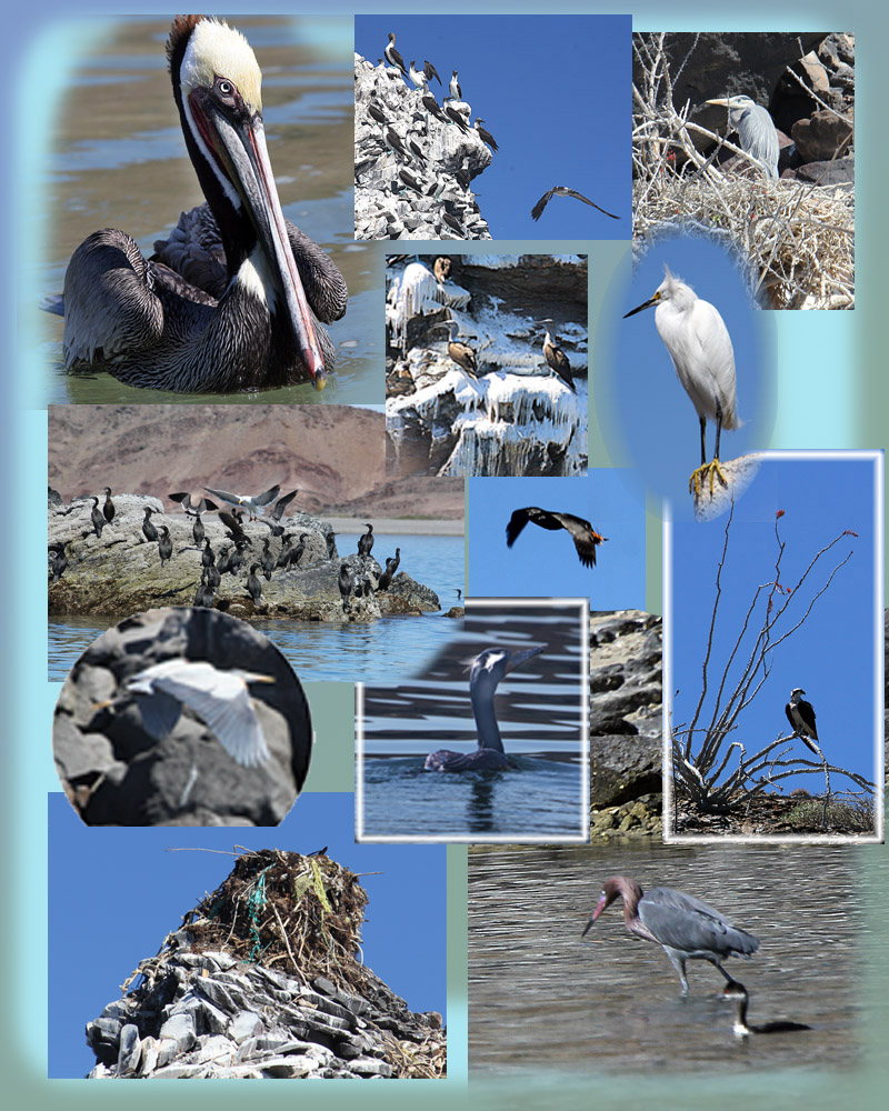 1.  THE BIRDS COLLAGE